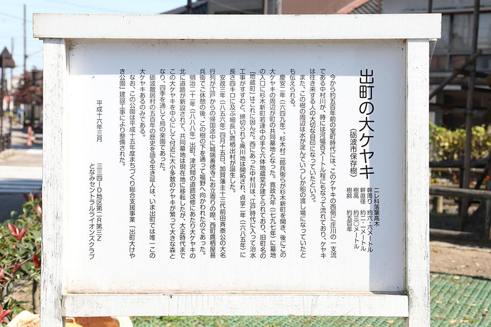 となみ公園ポータル 出町けやき公園 出町の大ケヤキ 説明